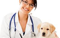 Surgitek - See Our Range of Veterinary Items